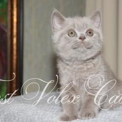 Janet kittens 1