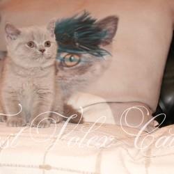 Janet kittens 2